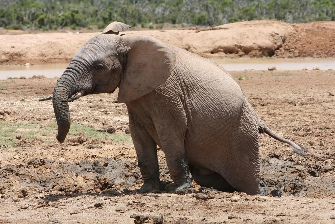 kwcmag بچه فیل در گل