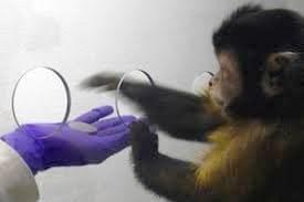 اقتصاد میمونی